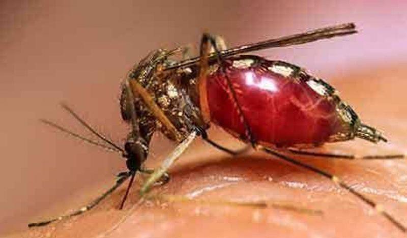 Ante la presencia del mosquito, previenen para combatir el dengue