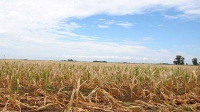 La sequía redujo la cosecha un 30%