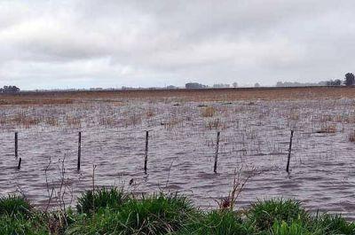 Estiman que un 30% de la cosecha fina de Olavarría se perdió por las inundaciones