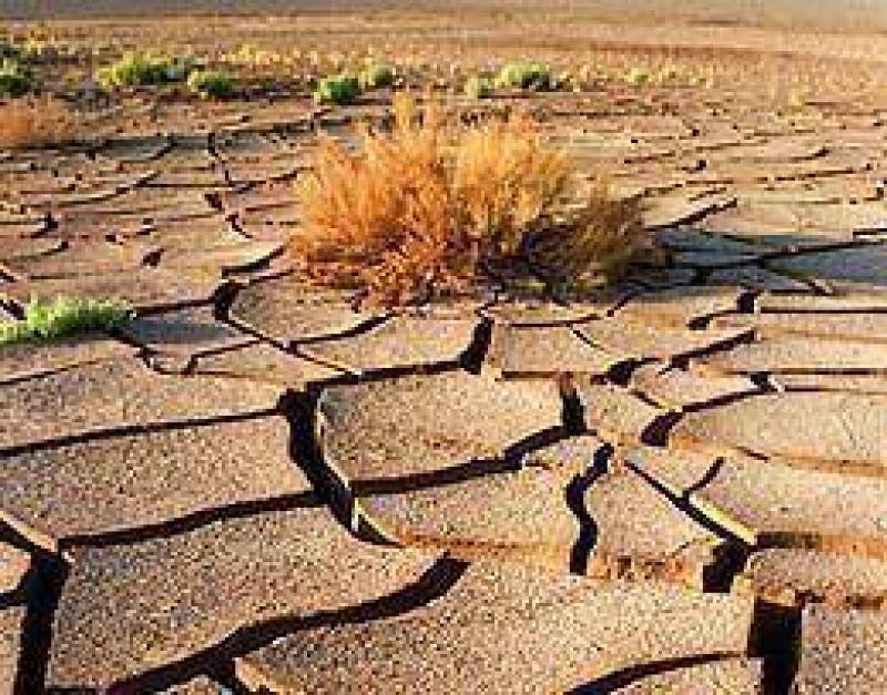 Prevén que el cambio climático afecte la agricultura argentina