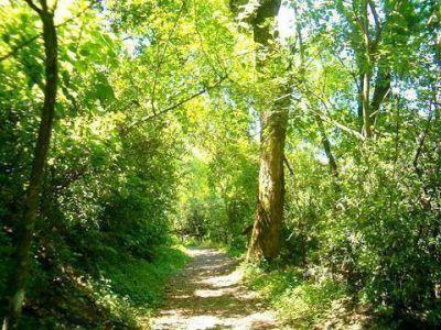 Naci�n asign� recursos para bosques nativos