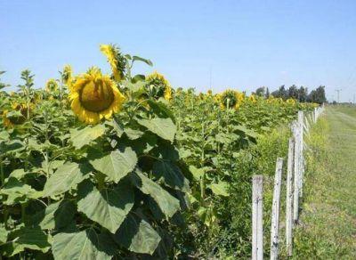 La lluvia impulsa la campaña productiva de los granos