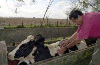 La vacunación antiaftosa hasta cien animales sigue siendo gratuita