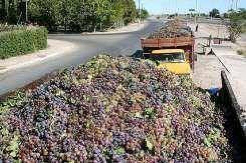 Mejora el precio de las uvas, baja el volumen de cosecha