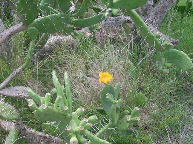 Reconocimiento de especies nativas y jornada de limpieza en la Reserva del Arroyo Balta
