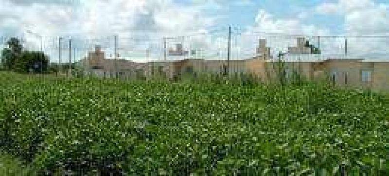 Para proteger a vecinos prohiben fumigar con agroqu�micos