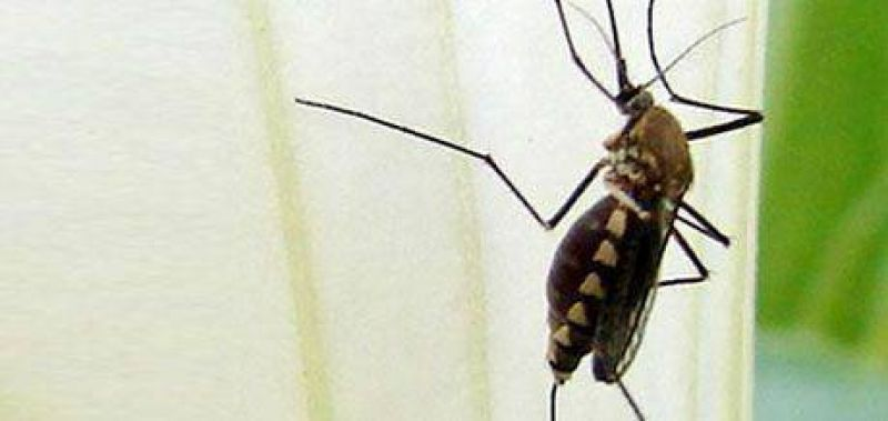 Hay casos de dengue en Resistencia.