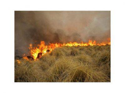 Desalojan una escuela rural en Malargüe por un incendio que ya arrasó 10.000 hectáreas