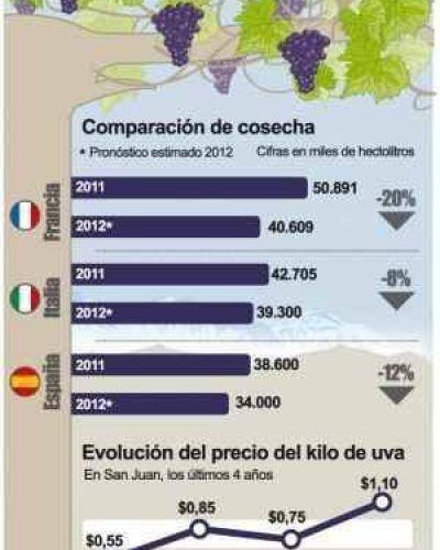 Cosecha de uvas: por la merma mundial prev�n alzas de precio