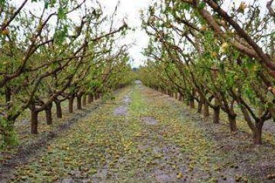 Gestiones por la producción frutihortícola