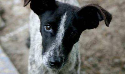 Alertan por envenenamiento serial de perros en Capital