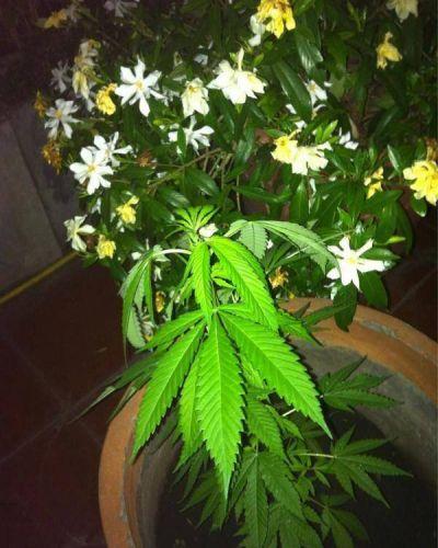 Gabriela Cerruti mostr� su planta de marihuana y se abri� el debate