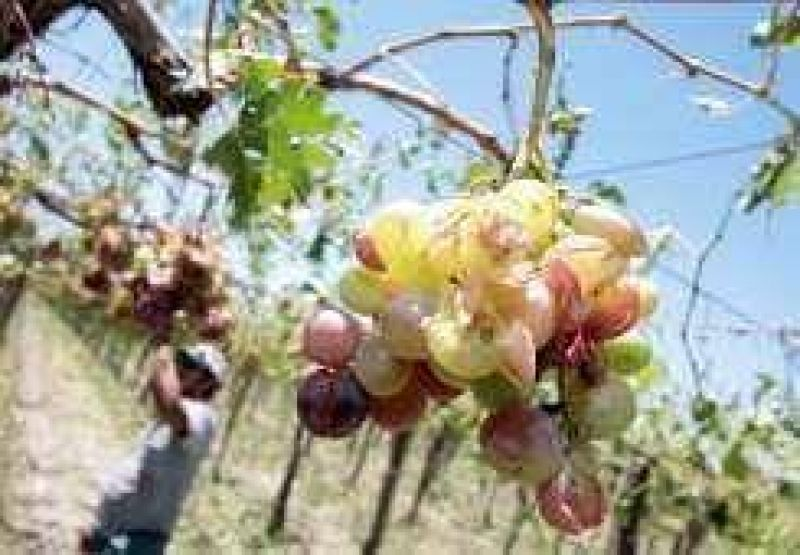Seguro agrícola: Contratarían al Banco Nación por $3 millones