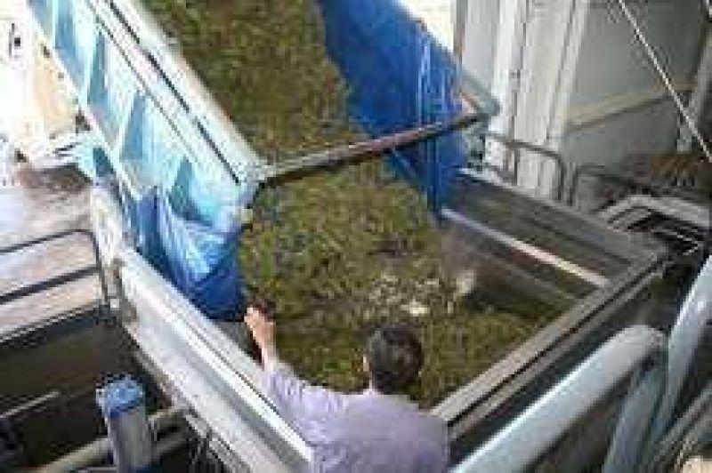 El operativo de compra de uva superó la expectativa oficial