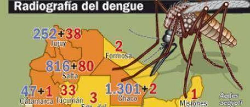 Dengue: alerta médica en Capital por posible epidemia