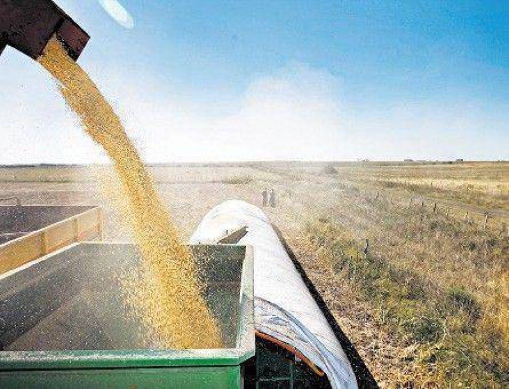 Prevé el Gobierno una fuerte caída de la cosecha de soja