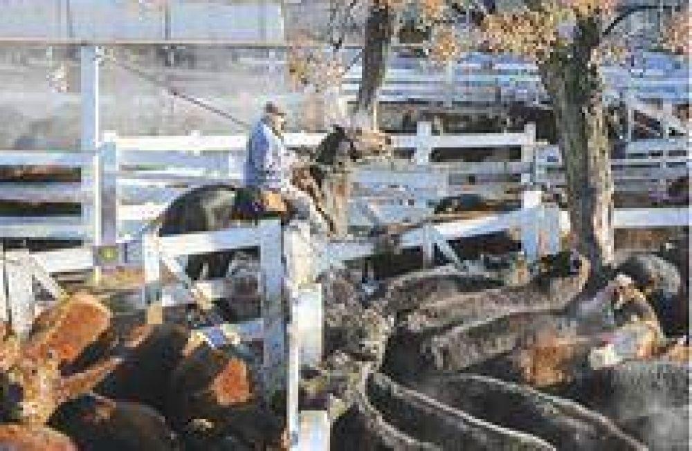 La entrada récord de animales a Liniers no hará bajar la carne