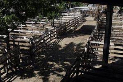 """De Angeli: """"Va a haber productores que se van a querer atrincherar en La Rural"""""""
