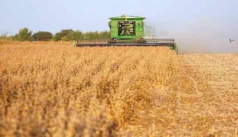 La cosecha de soja será similar a la anterior