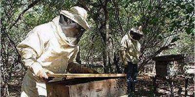 Fuerte intervención del gobierno en la comercialización de la producción apícola