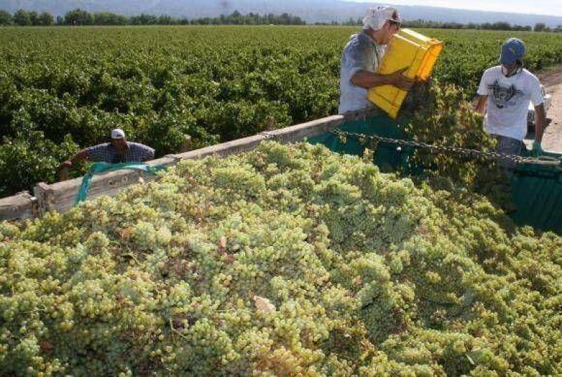Inusual: Las uvas mendocinas superaron a San Juan en grado.