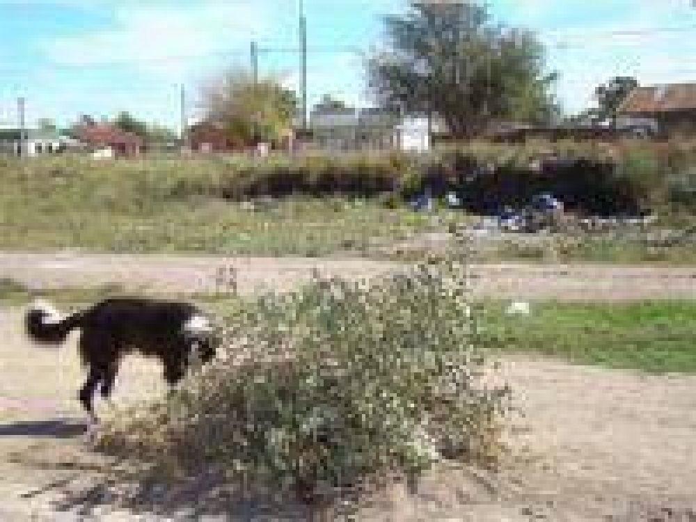 La Municipalidad ahora cobra para recolectar ramas, 30 pesos.