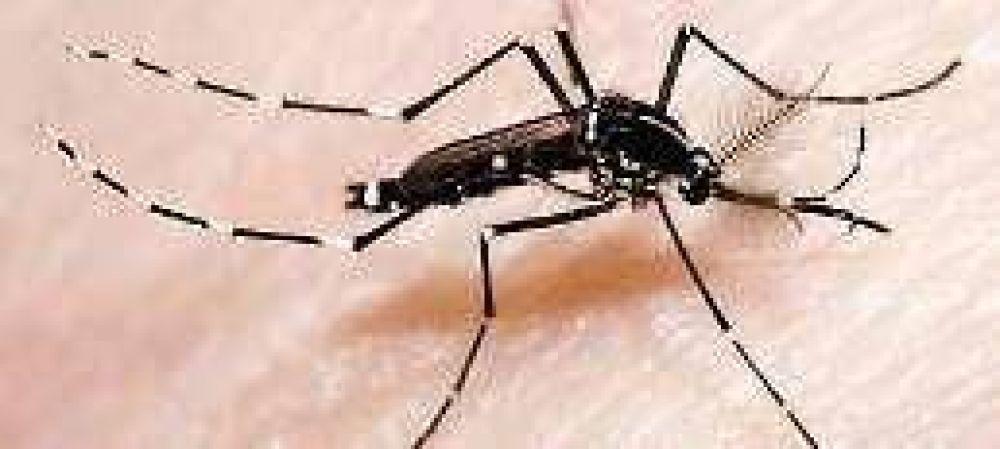 Advierten en Buenos Aires sobre otro mosquito que transmite el dengue