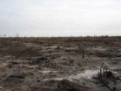 El desmonte llegó al millón de hectáreas en los últimos cinco años