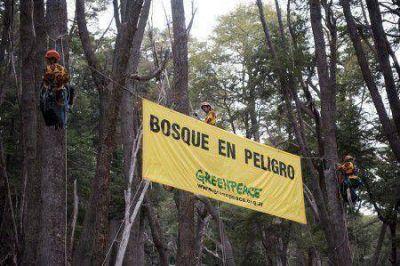 Organizaciones ambientalistas advierten pocos avances en la aplicación de la Ley de Bosques