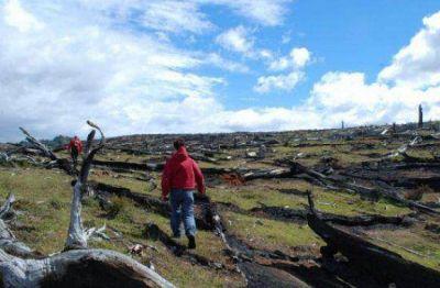 Se perdieron un 15% de bosque nativo