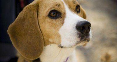 Inglaterra ordena que todos los perros del país tengan un microchip para 2016