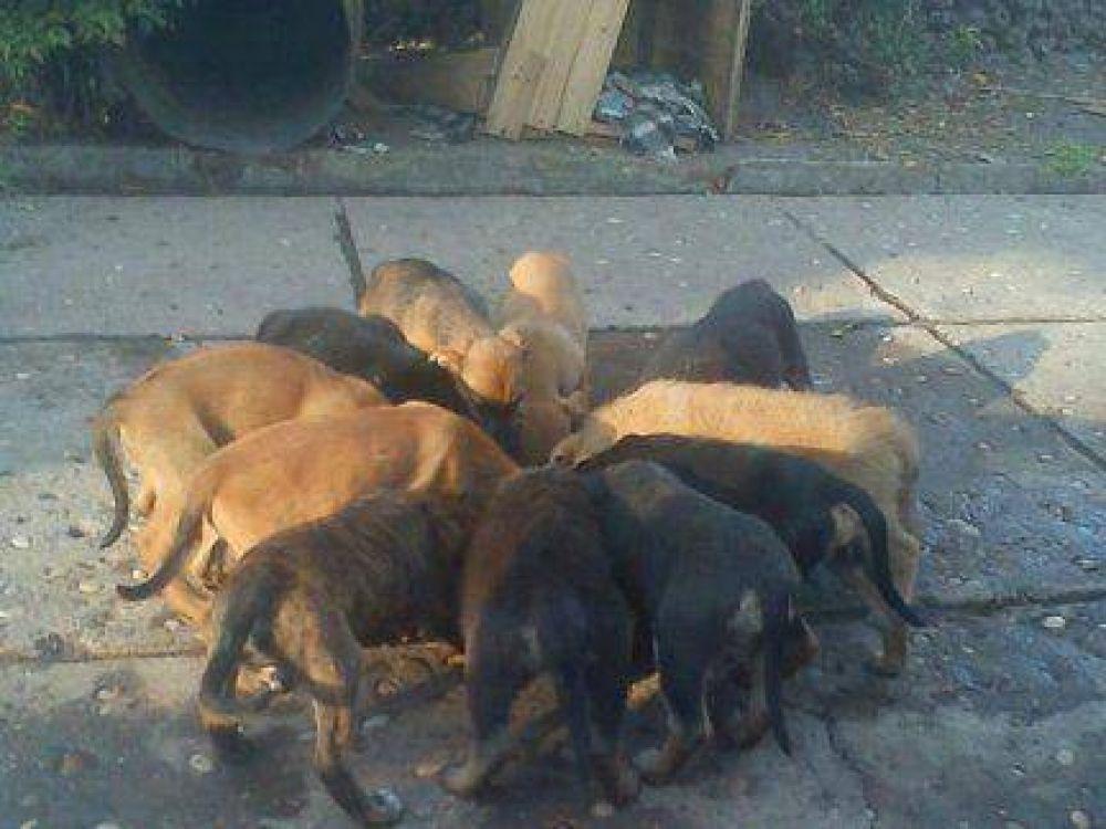 Una ordenanza dispuso multar a quienes alimenten a animales en la calle