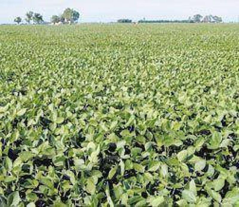 La soja sube fuerte en Chicago pero no impacta en Argentina