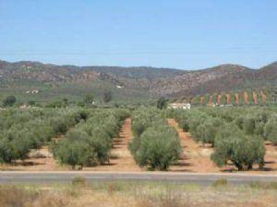 Detallar�n c�mo se utiliz� un fondo para el sector oliv�cola
