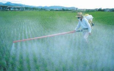 Agrotóxicos: ambientalistas preocupados por posibles modificaciones