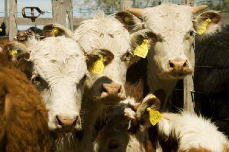 El Sindicato de la Carne dice que no hay stock suficiente para la industria y temen despidos