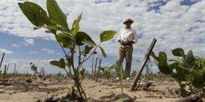 La sequía arrasa con la agricultura