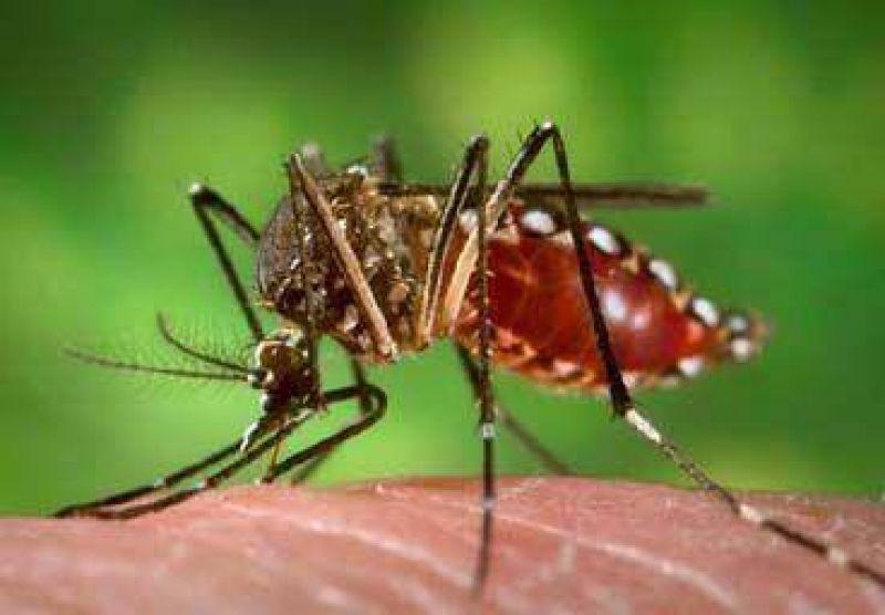 Continúa el operativo contra el dengue en la zona Norte de la ciudad.