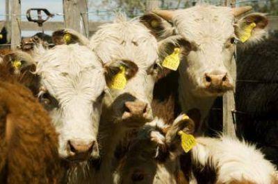 """""""FRIDEVI no va a perder con el corrimiento de la barrera y además de bovinos puede faenar corderos"""""""