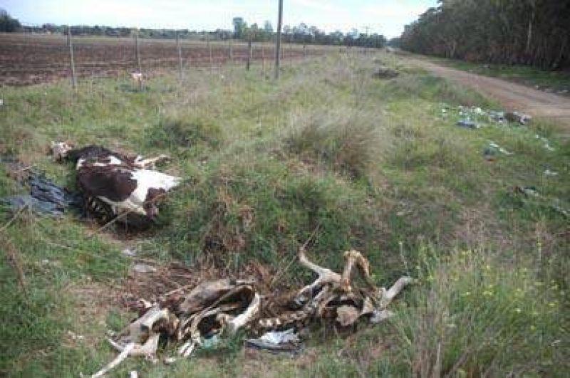 Malestar por la gran cantidad de basura acumulada en el Camino de Circunvalación