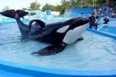 Un grupo de diputados pidió la liberación de la orca de Mundo Marino