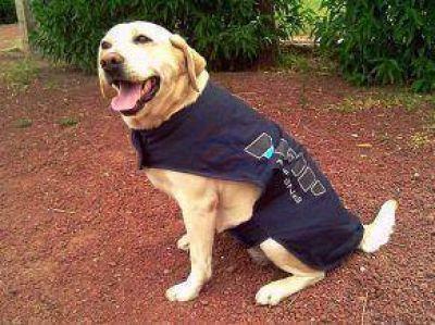 Por el día del animal la AFIP realizará demostraciones con sus canes en Bahía Blanca