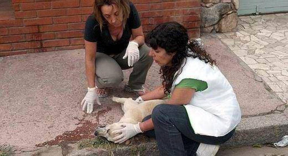 Denuncian que el Ministerio de Salud está detrás de matanza de perros en Deán Funes