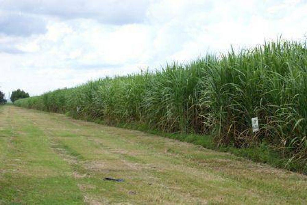 Obreros del azúcar de Jujuy y Salta promueve negociación paritaria con los ingenios