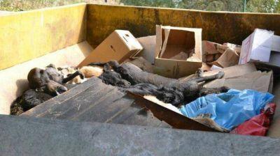 Deán Funes: hallan más cebos con veneno y sigue la emergencia