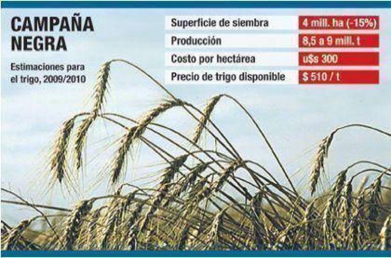 Malo para el campo: caería hasta un 20% siembra de trigo