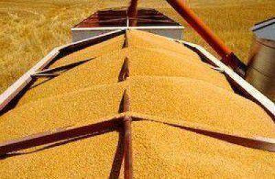 """""""Si quieren incentivar la siembra del trigo, que saquen las retenciones"""""""