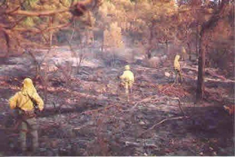 Presentan una estrategia nacional para evitar emisiones de la deforestación