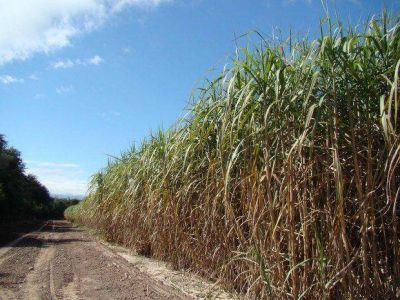 El martes se iniciarán paritarias azucareras