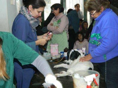 Brindan atención veterinaria gratuita para perros y gatos